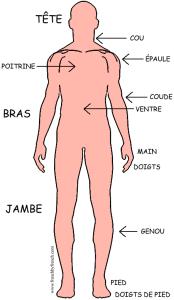 human_body_level1